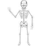 Skelett- kompis Royaltyfri Fotografi