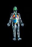 Skelett mit bunten Organen Stockbild