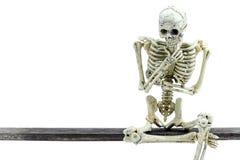 Skelett- modell på vit bakgrund Royaltyfri Bild