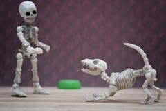 Skelett och hans skelett- hund Arkivbilder