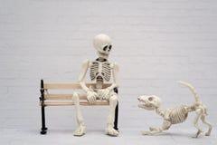 Skelett och hans skelett- hund Royaltyfri Fotografi