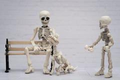 Skelett och hans skelett- hund Arkivfoton