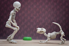 Skelett och hans skelett- hund Royaltyfria Bilder