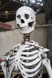 Skelett som hänger på rep Arkivbilder