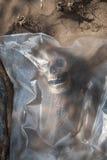 Skelett som slås in i en plastpåse arkivfoton