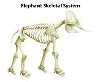 Skelett- system av en elefant Royaltyfri Bild