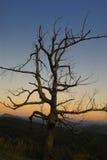 skelett- tree Arkivfoto