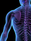 skelett x för stråle för mänsklig illustration för huvuddel male Royaltyfria Bilder