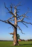 Skelettartiger Baum Stockbild