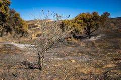 Skelettartiger gebrannter Baum Lizenzfreie Stockbilder