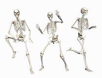 Skelette Lizenzfreies Stockfoto