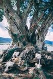 Skelette unter Baum in Afrika lizenzfreie stockfotografie