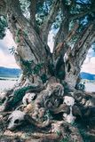 Skeletten onder boom in Afrika royalty-vrije stock fotografie