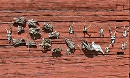 Skeletten op een rode houten muur Stock Afbeelding