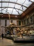Skeletten van dinosaurussen Stock Foto's