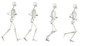 Skelettet arkivfoto