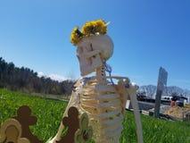 Skelettet för den Kruna jetvojaen i parkerar med en blommakrona royaltyfri fotografi