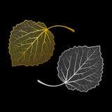 Skelettierte Blätter Stockfotos