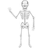 Skeletvriend Royalty-vrije Stock Fotografie