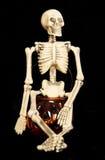 Skeletzitting op een pompoenkruik Stock Foto's