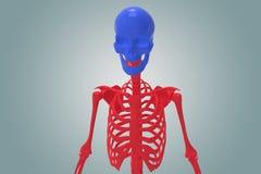 Skeltan umano Fotografie Stock