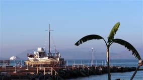 Skepp och palmträd på stranden corfu greece arkivfilmer
