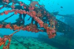 Skeppsbrott i havblått, Maldiverna royaltyfria foton