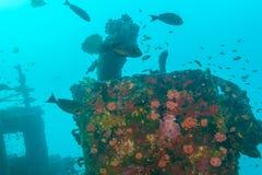 Skeppsbrott i havblått, Maldiverna royaltyfri foto