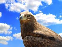 Skeptical eagle on sky background. stock photos