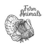 sketc farm turkey on a white background Royalty Free Stock Photography
