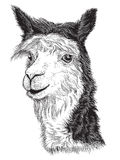 Sketch of a Alpaca's face Royalty Free Stock Photography