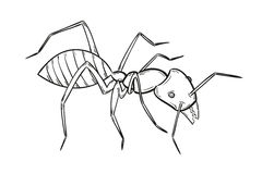 Sketch of the ant Stock Photography