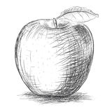 Sketch   apple Stock Images