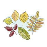 Sketch of autumn leaves for your design Stock Photography