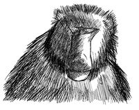 Sketch of a baboon isolated Royalty Free Stock Images