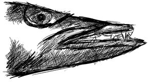 Sketch of a barracuda head isolated. Image representing a barracuda. An idea to talk about this fish. Image that can be used also as logo stock illustration