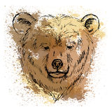 Sketch bear head  on the background of watercolor stains. Sketch by pen bear head  on the background of watercolor stains Stock Photography