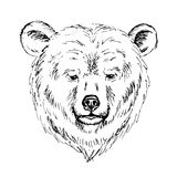 Sketch of a bear  head. Sketch by pen of a bear  head Stock Images