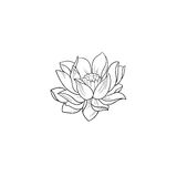 A sketch of a beautiful lotus on a white background. Royalty Free Stock Images