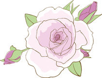 Sketch of beautiful rose Stock Photo