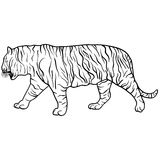 Sketch beautiful tiger on a white background. Vector illustration Stock Image
