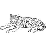 Sketch beautiful tiger on a white background. Vector illustration Royalty Free Stock Photos