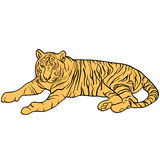 Sketch beautiful tiger on a white background. Vector illustration Stock Photos