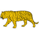 Sketch beautiful tiger on a white background. Vector illustration Royalty Free Stock Image