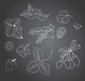The sketch of berries on a blackboard. Stock Image