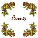 Sketch berries frame Stock Photography