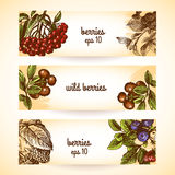 Sketch berries seamless pattern Royalty Free Stock Photos