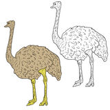 Sketch big ostrich standing on a white background. Vector illustration Royalty Free Stock Image