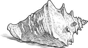 Sketch of a big sea cockleshell. Vector drawing of a big seashell Stock Photo