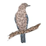 Sketch of bird Royalty Free Stock Images